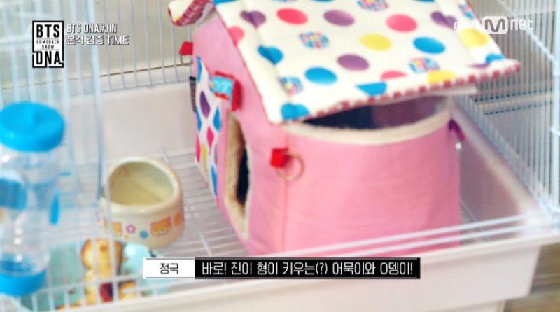 BTS Jin Introduces His Cute Pets | Korea Dispatch